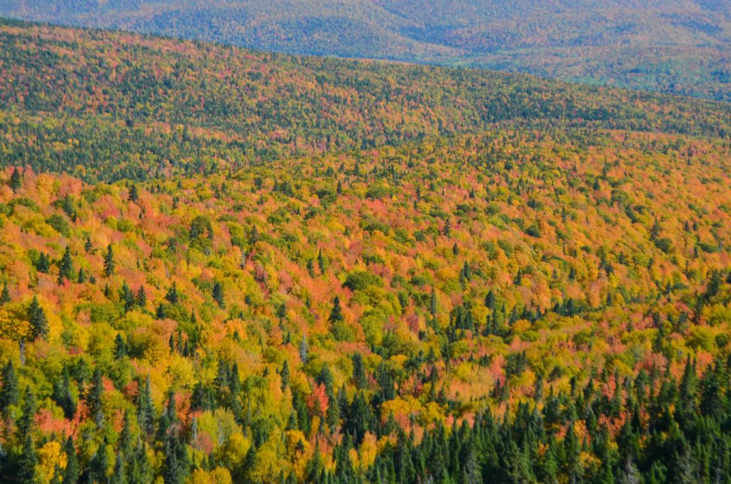 PVT Canada nature
