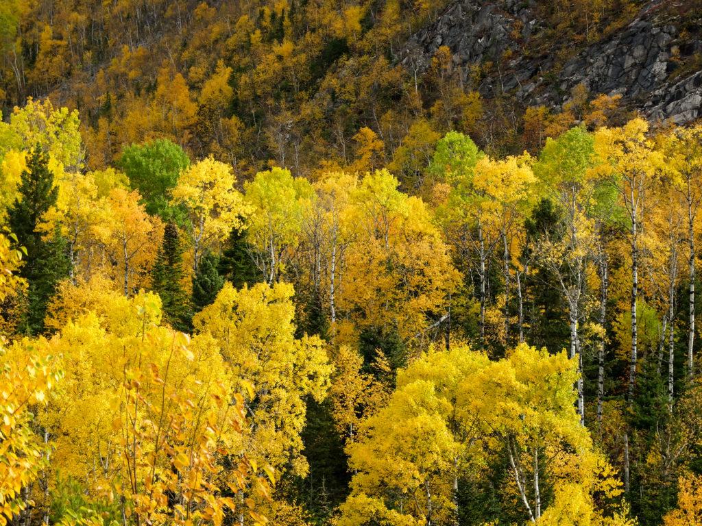 parc des grands jardin jaune doré